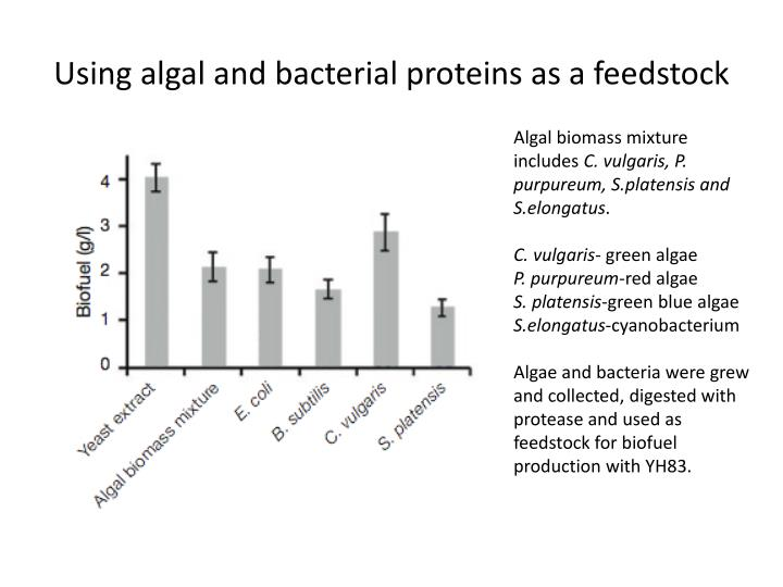 Using algal and bacterial proteins as a feedstock