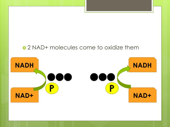 2 NAD+ molecules come to oxidize them