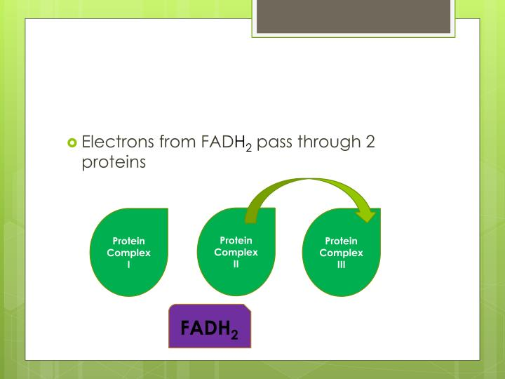 Electrons from FAD