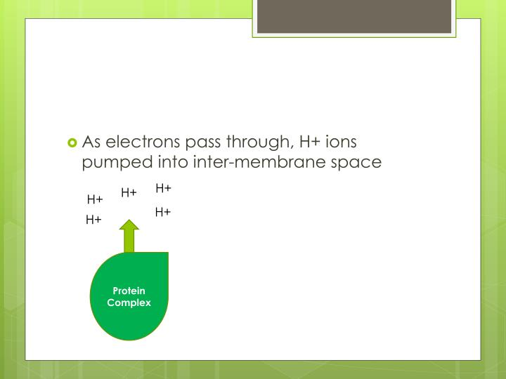 As electrons pass through, H+ ions pumped into inter-membrane space