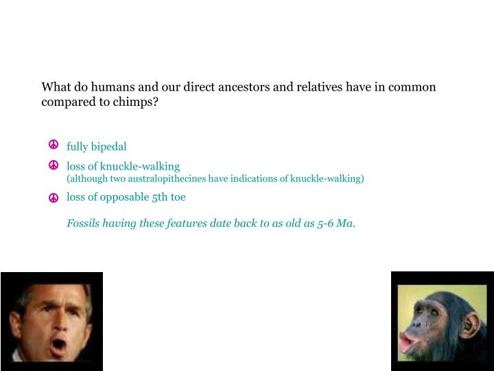 What do humans and our direct ancestors and relatives have in common