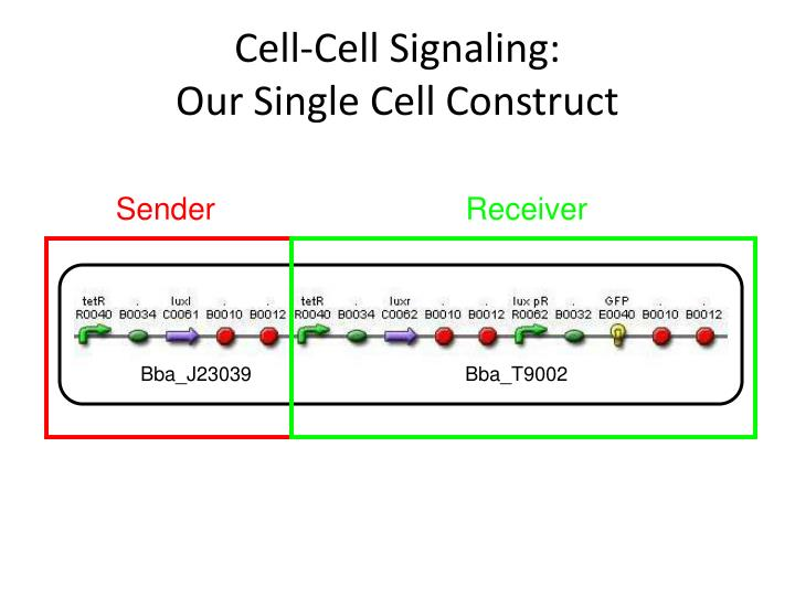 Cell cell signaling our single cell construct