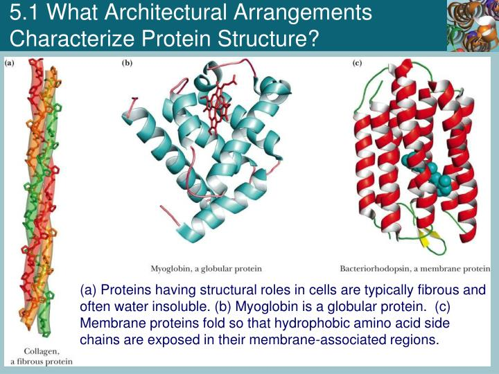 5.1 What Architectural Arrangements Characterize Protein Structure?