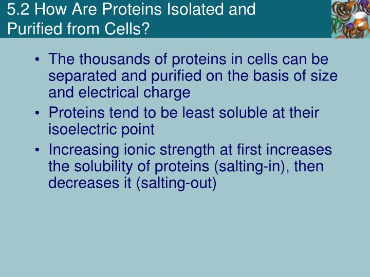 5.2 How Are Proteins Isolated and Purified from Cells?