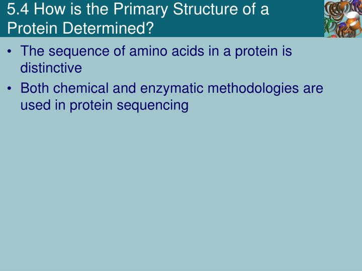 5.4 How is the Primary Structure of a Protein Determined?