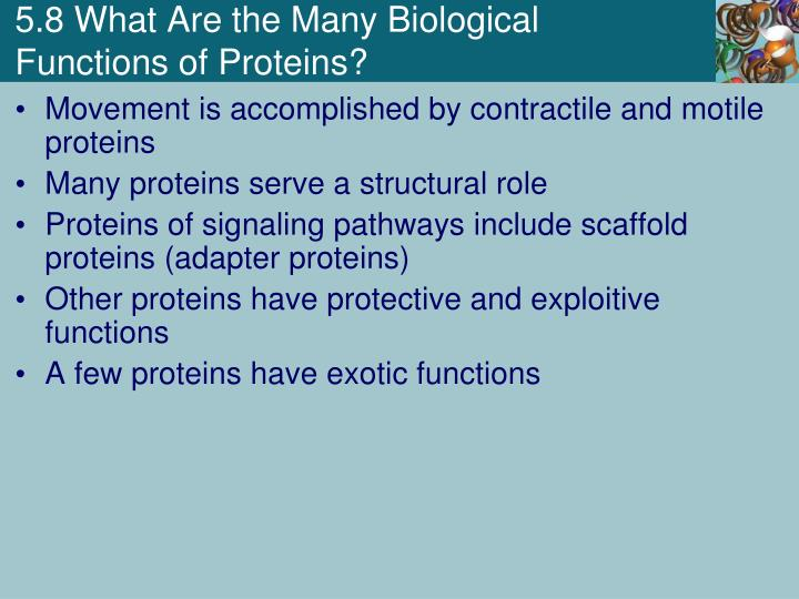 5.8 What Are the Many Biological Functions of Proteins?