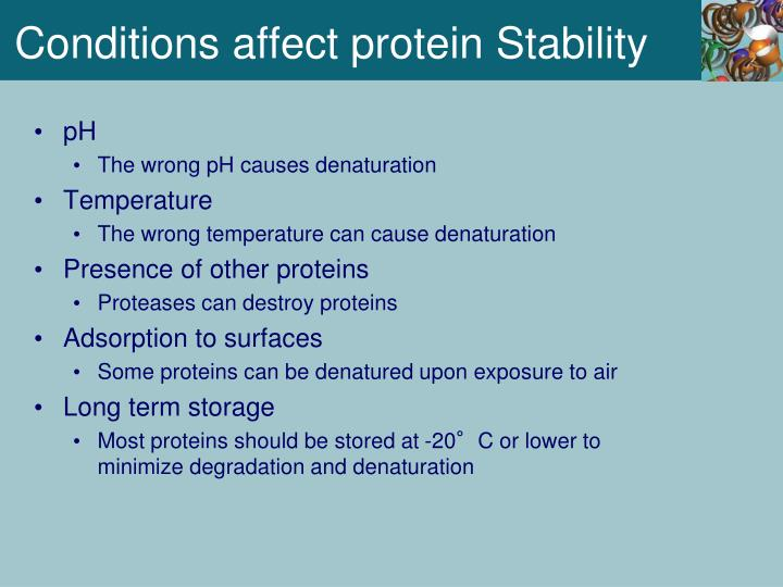 Conditions affect protein Stability