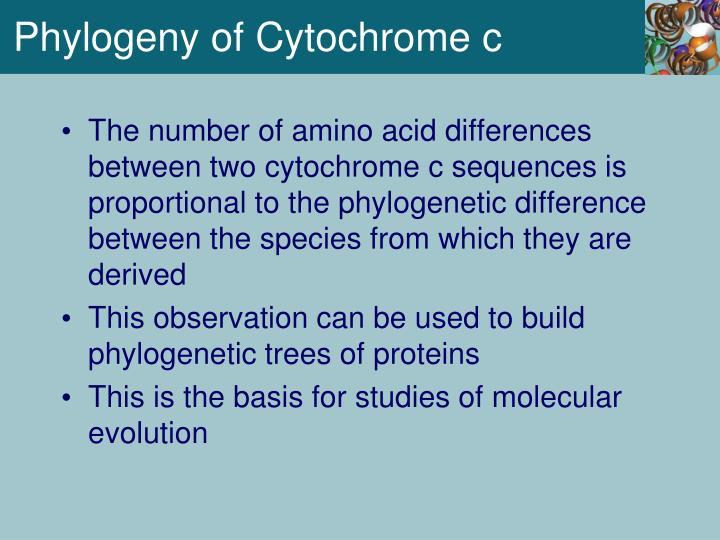 Phylogeny of Cytochrome c