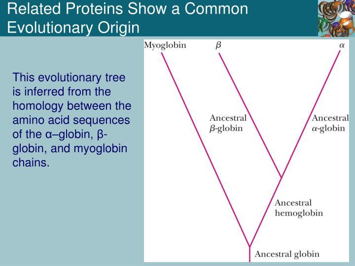 Related Proteins Show a Common Evolutionary Origin