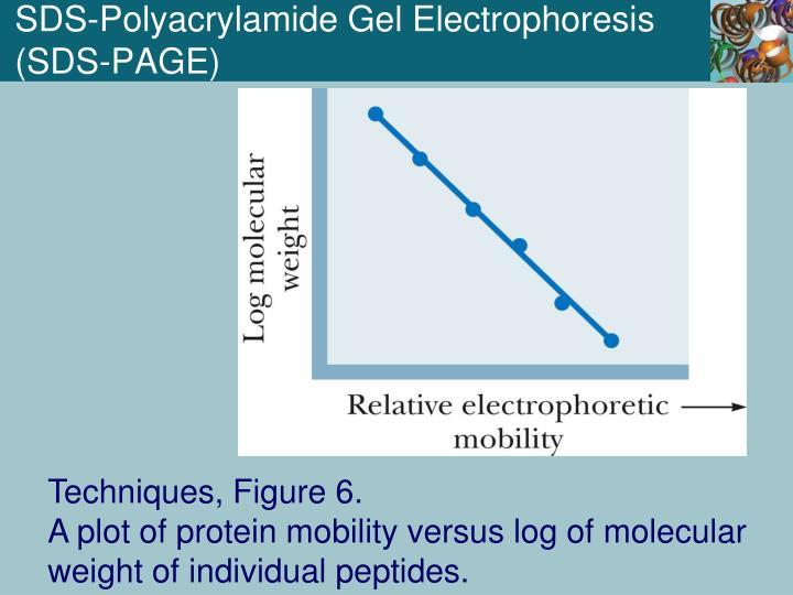 SDS-Polyacrylamide Gel Electrophoresis (SDS-PAGE)