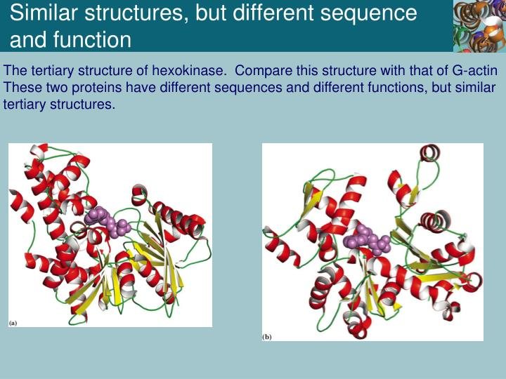 Similar structures, but different sequence and function