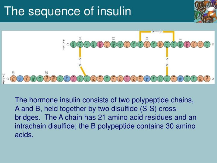 The sequence of insulin