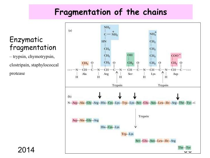 Fragmentation of the chains