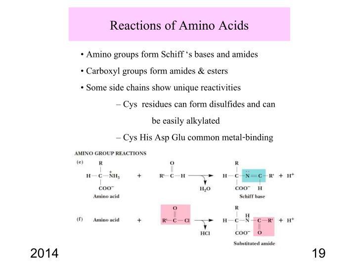 Reactions of Amino Acids
