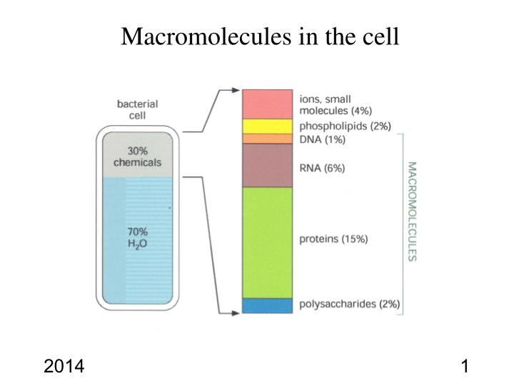 Macromolecules in the cell
