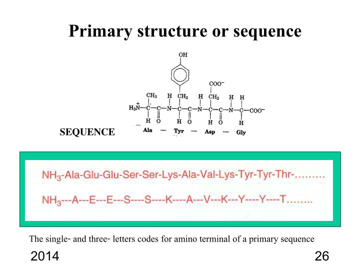 Primary structure or sequence