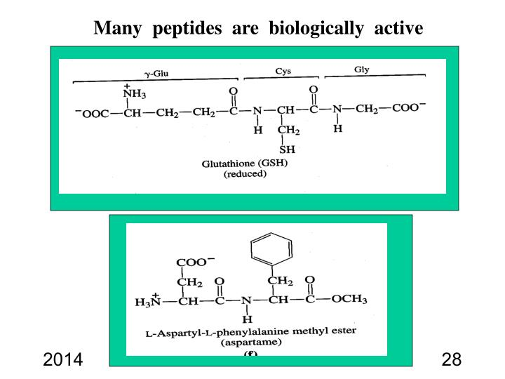 Many  peptides  are  biologically  active