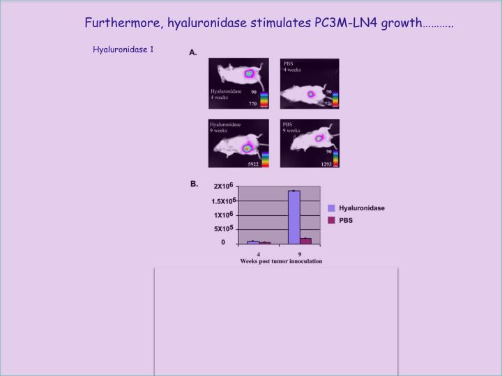 Furthermore, hyaluronidase stimulates PC3M-LN4 growth………..