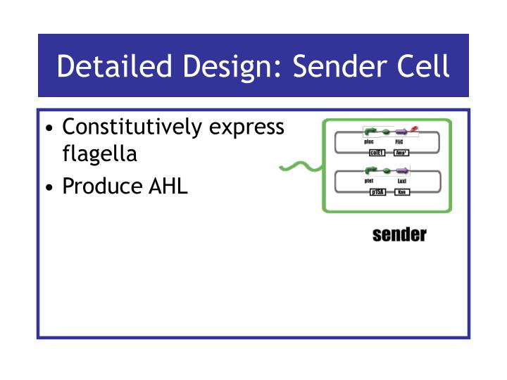 Detailed Design: Sender Cell