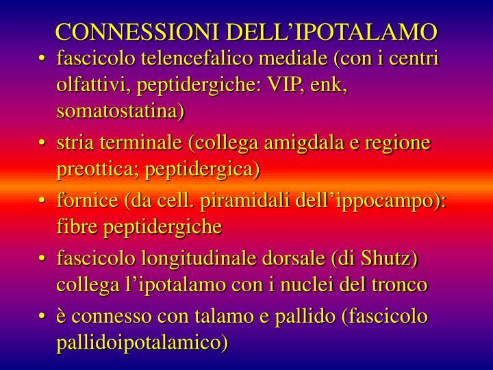 CONNESSIONI DELL'IPOTALAMO