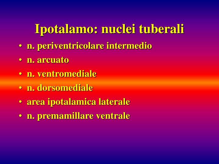 Ipotalamo: nuclei tuberali