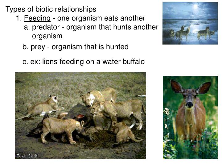 Types of biotic relationships
