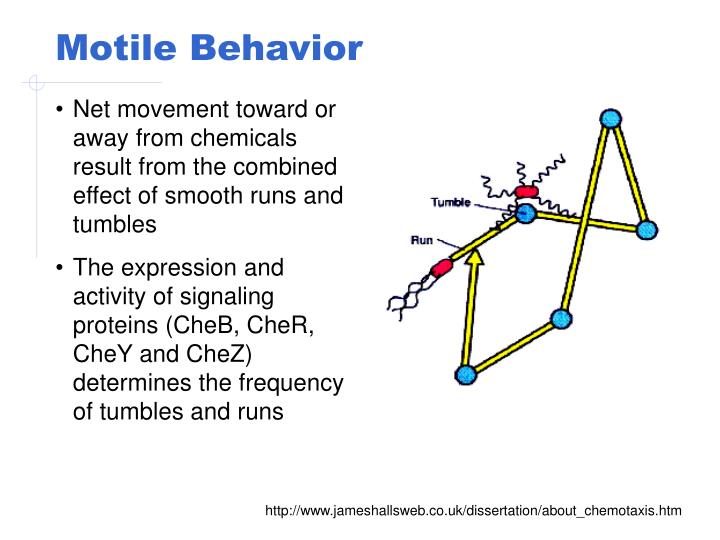 Motile Behavior