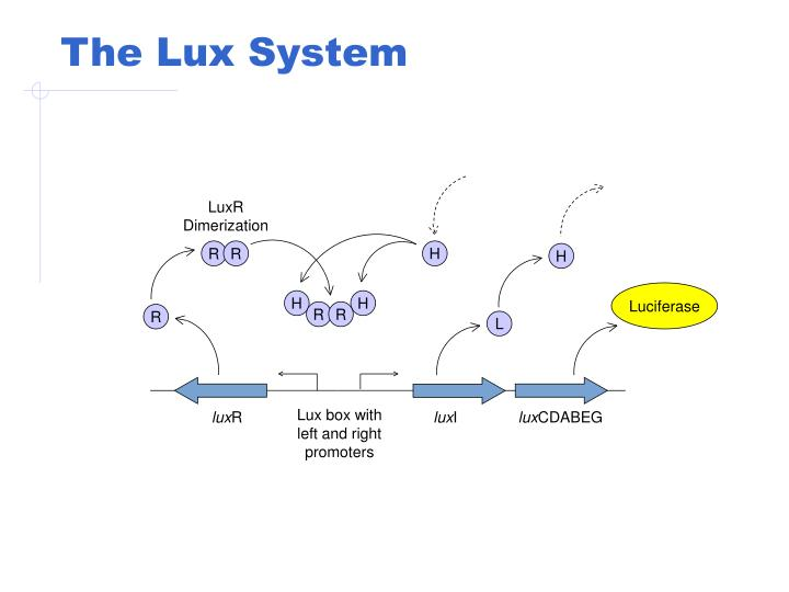 The Lux System