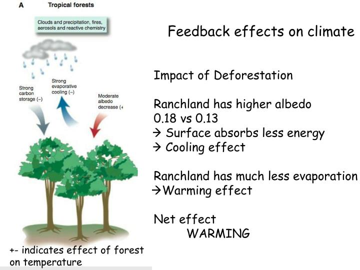 Feedback effects on climate