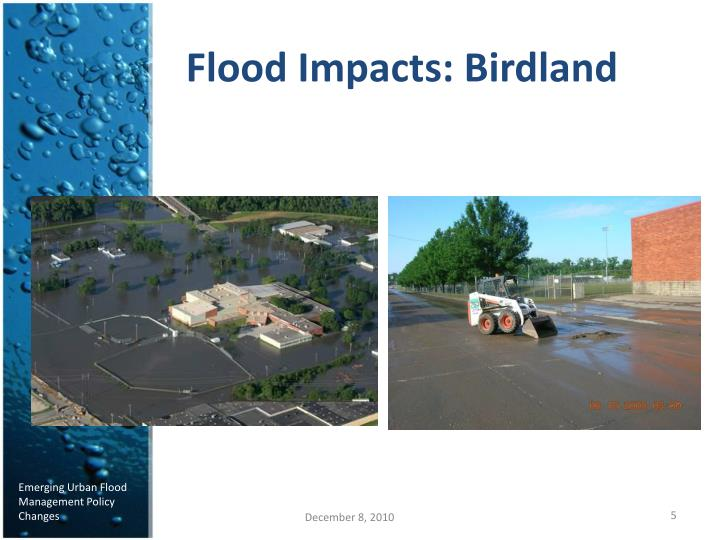 Flood Impacts: Birdland
