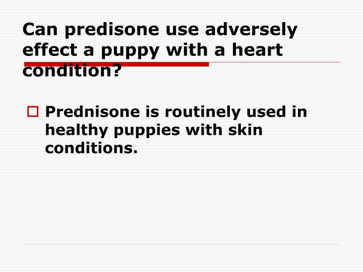 Can predisone use adversely effect a puppy with a heart condition?