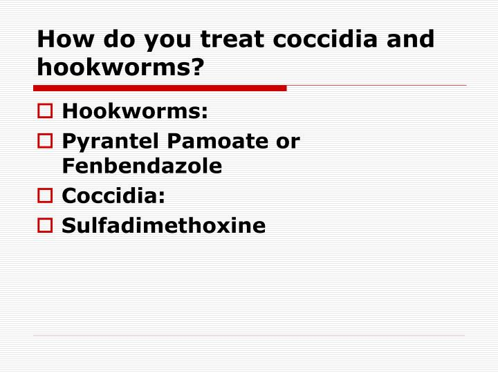 How do you treat coccidia and hookworms?