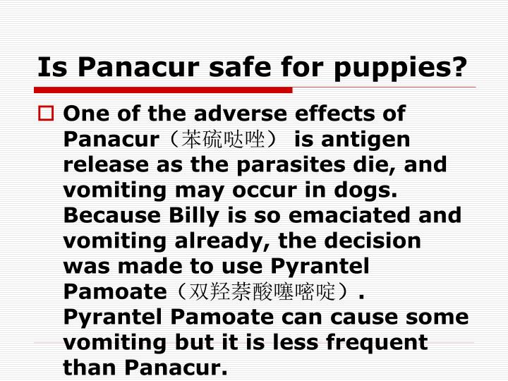 Is Panacur safe for puppies?