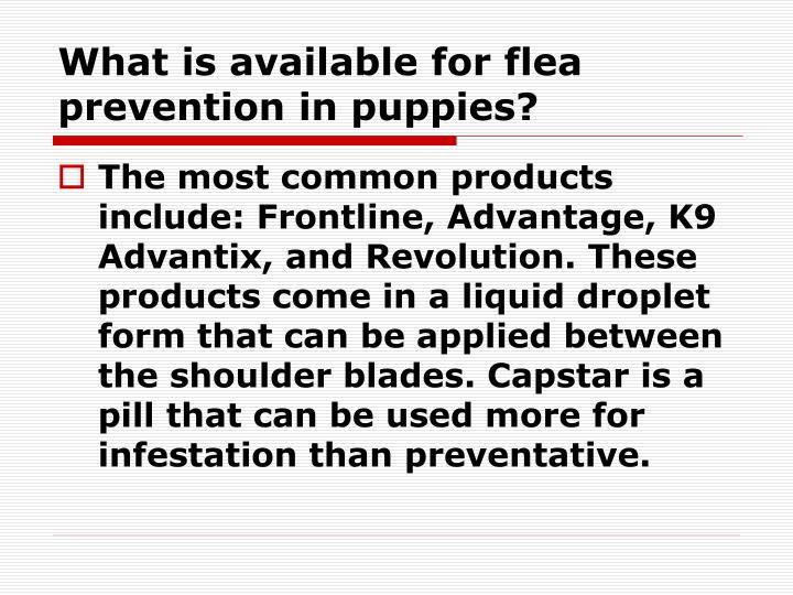 What is available for flea prevention in puppies?