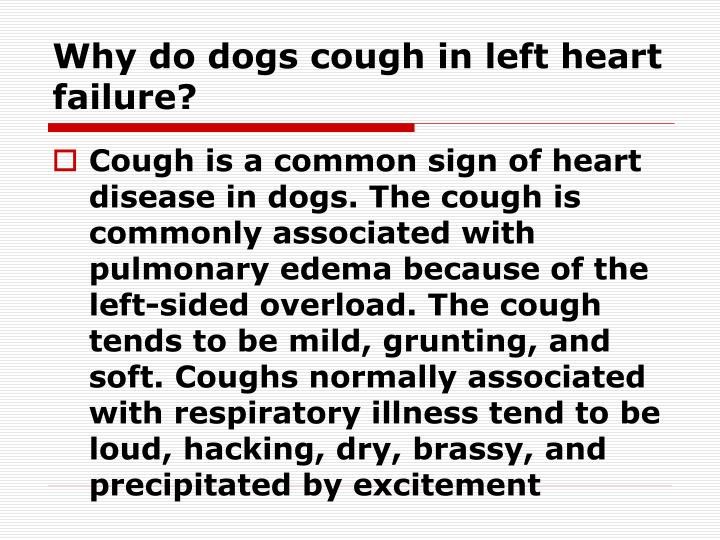 Why do dogs cough in left heart failure?