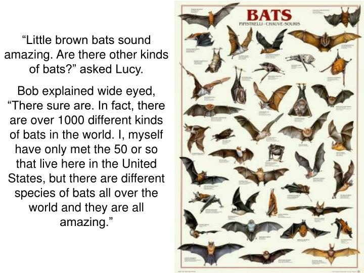 """Little brown bats sound amazing. Are there other kinds of bats?"" asked Lucy."