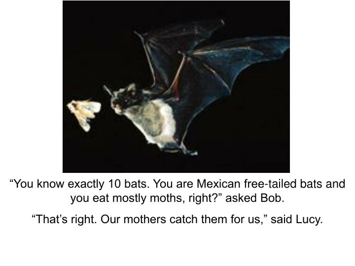 """You know exactly 10 bats. You are Mexican free-tailed bats and you eat mostly moths, right?"" asked Bob."