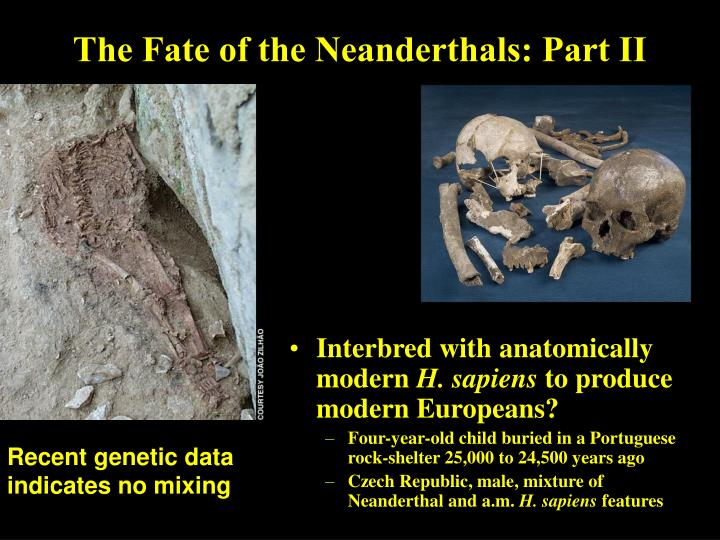 The Fate of the Neanderthals: Part II