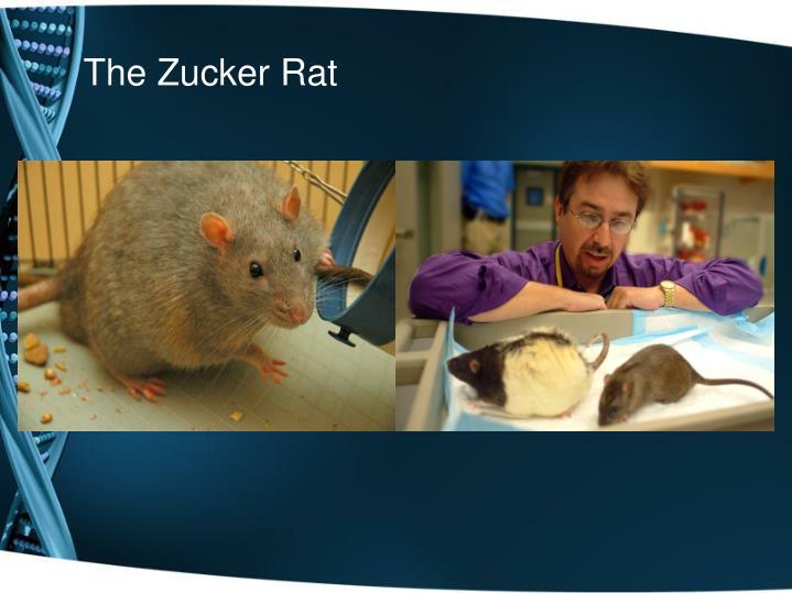 The Zucker Rat