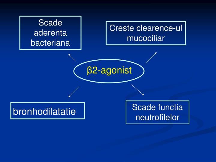 Scade aderenta bacteriana