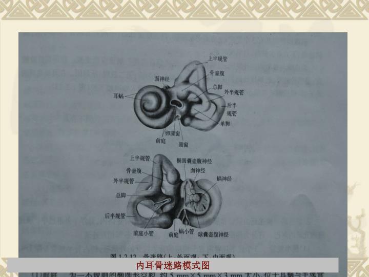 内耳骨迷路模式图