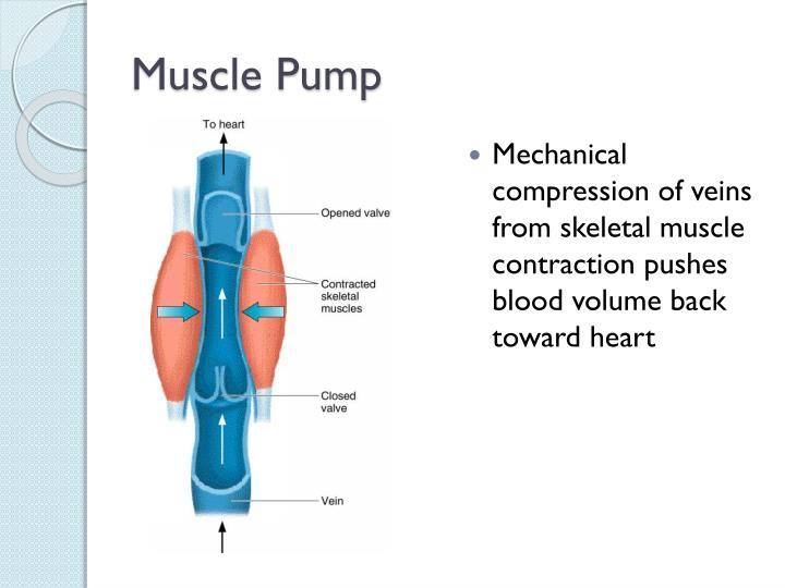 Muscle Pump