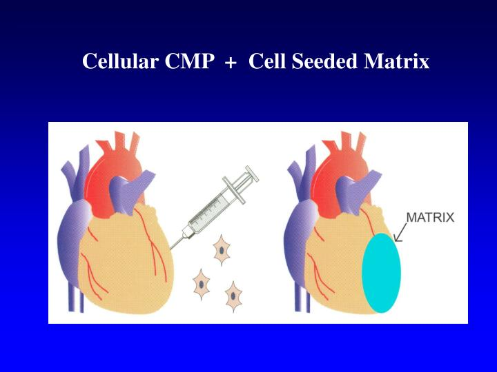Cellular CMP  +  Cell Seeded Matrix