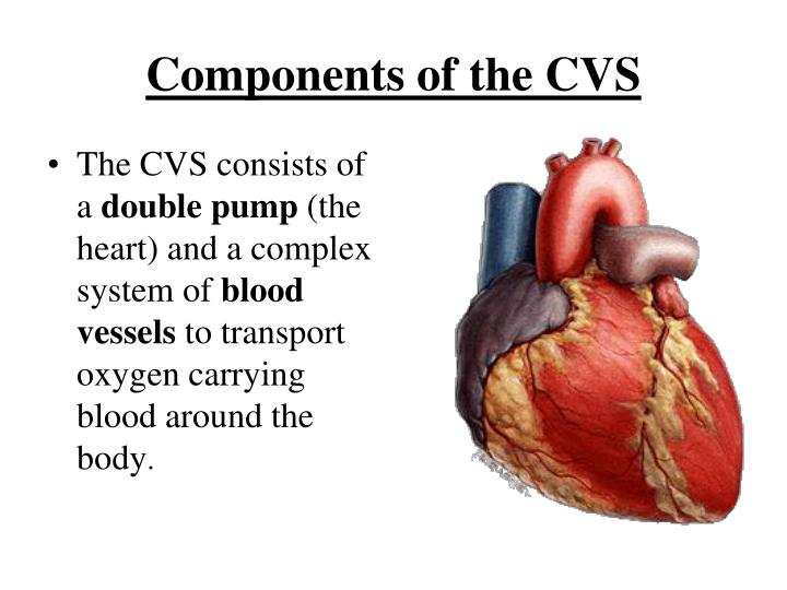 Components of the CVS