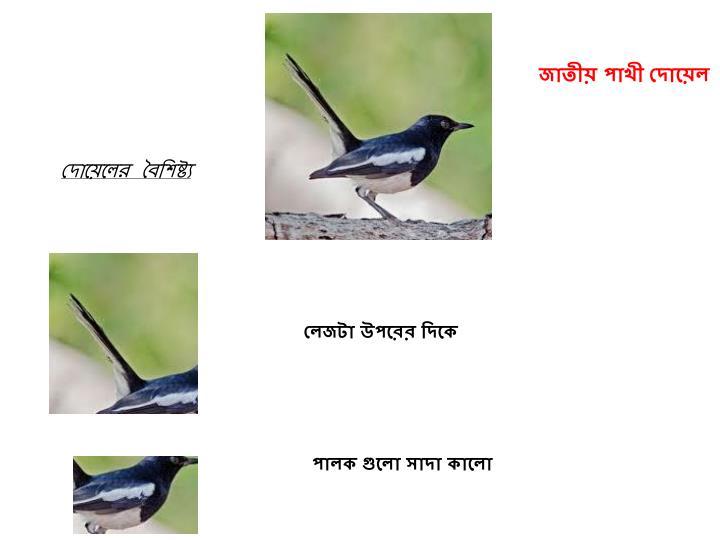 জাতীয় পাখী দোয়েল