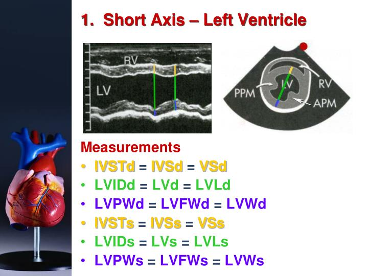 1.  Short Axis – Left Ventricle