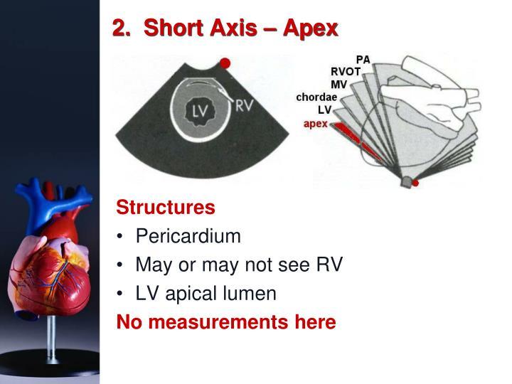 2.  Short Axis – Apex