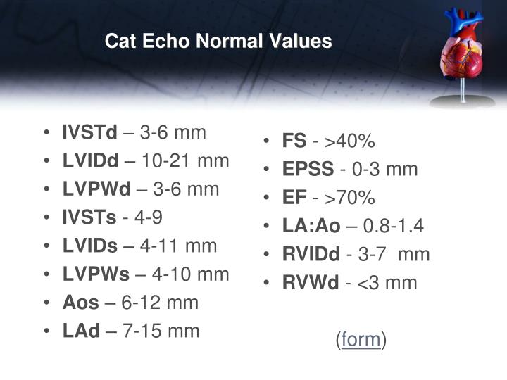 Cat Echo Normal Values