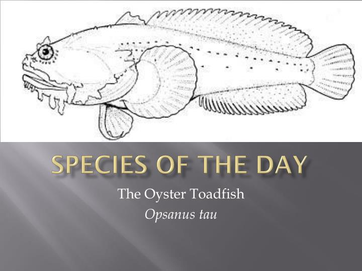 Species of the Day