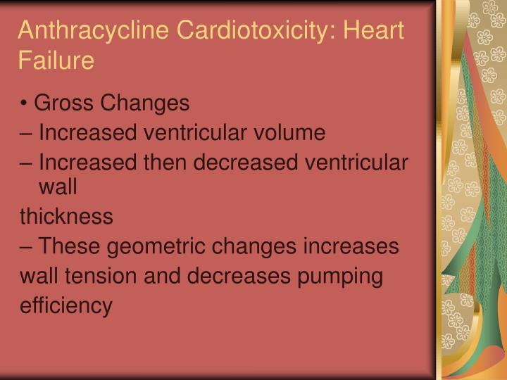 Anthracycline Cardiotoxicity: Heart
